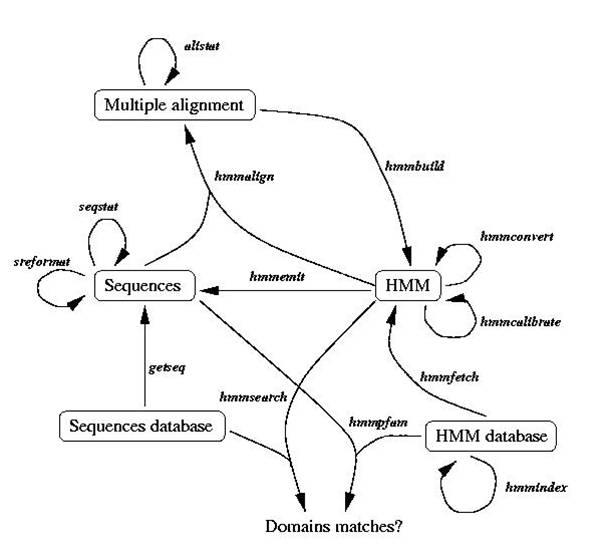 基于HMM的基因功能鉴定