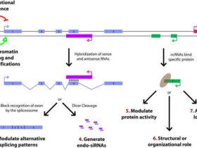 长链非编码RNA(lncRNA)简介