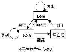 分子生物中心法则