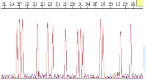 影响3730测序质量的因素