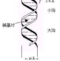 生物大分子结构的测定