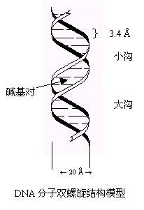 遗传信息载体—DNA