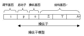 基因组结构
