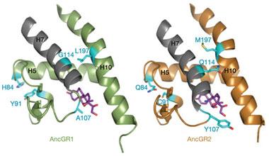 芯片实验室技术实现单细胞基因分析