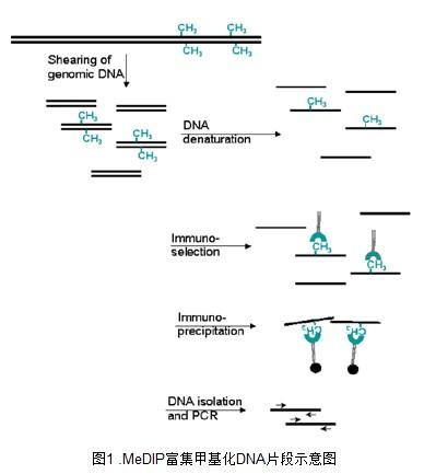 DNA甲基化测序问题集锦