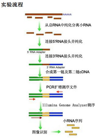 Small RNA测序相关问题集锦