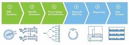 CpG岛甲基化图谱分析的三种优化流程