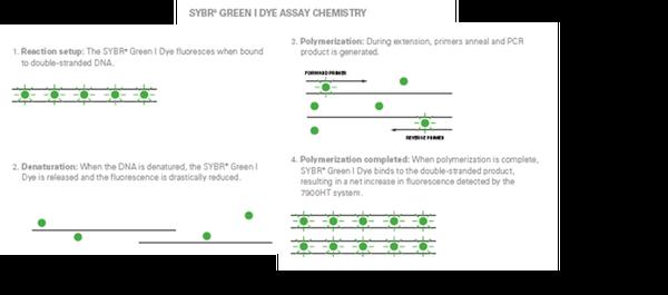 Q-PCR(Real-time PCR)