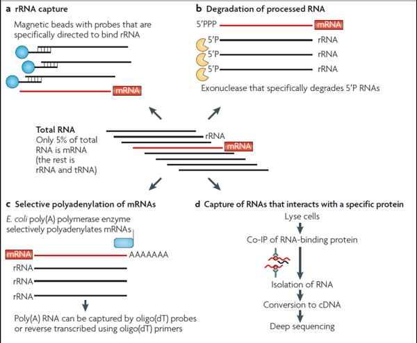 原核生物转录组研究方法