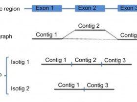 Running newbler: de novo transcriptome assembly I