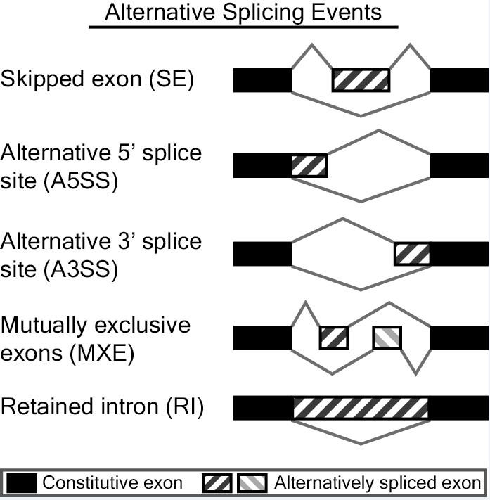 RNASeq-MATS:Multivariate Analysis of Transcript Splicing
