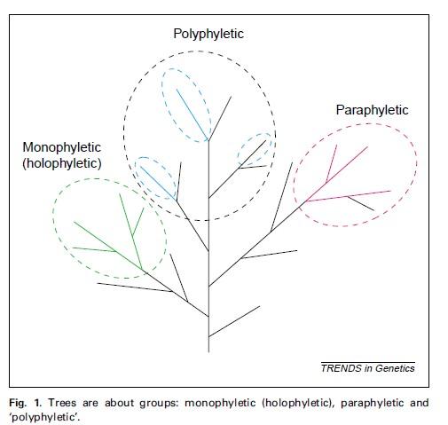 推荐一篇关于如何构建和分析进化树的文章