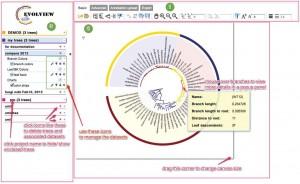 推荐一款强大的进化树编辑软件