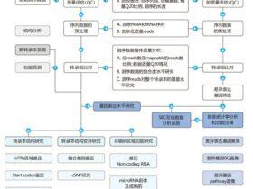 转录组测序概述及实验分析流程