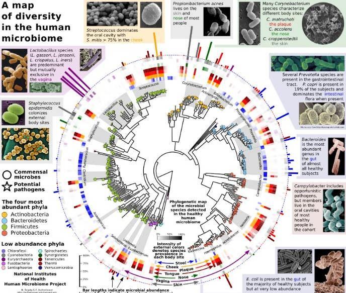 宏基因组学中微生物种群结构分析