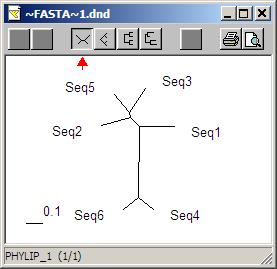 使用BioEdit生成和绘制蛋白质进化树