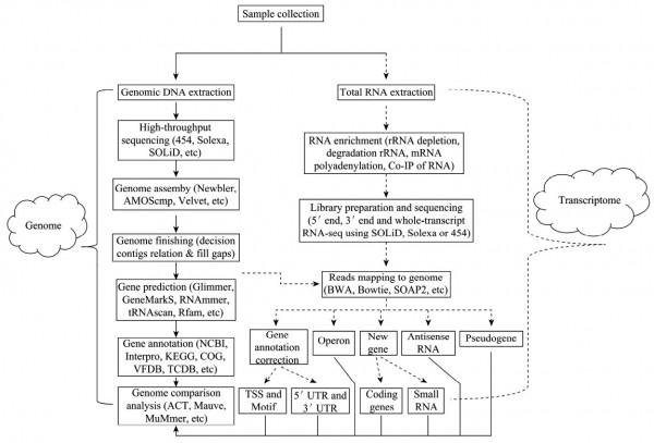 基于第二代测序技术的细菌基因组与转录组研究策略