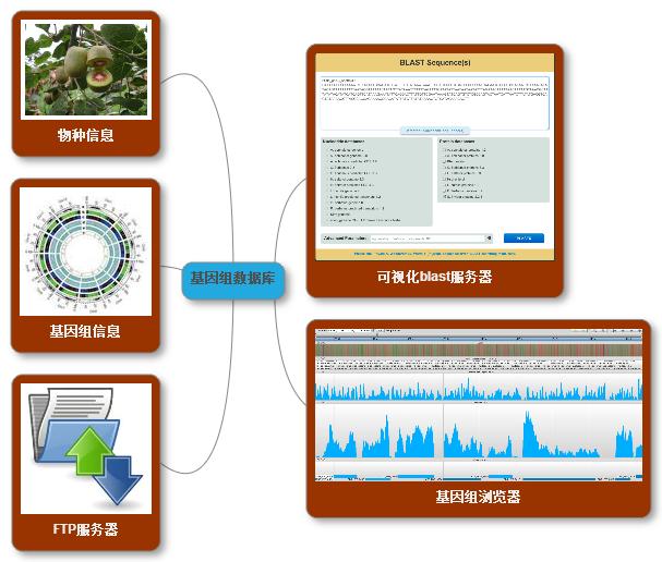 基因组数据库-一个物种的官网