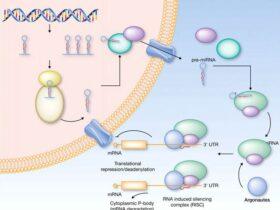盘点癌症中的microRNA