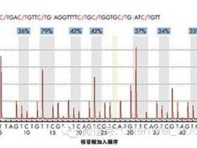 PyroSequencing—DNA甲基化分析的金标准
