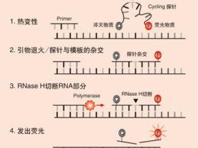 Real Time PCR 检测方法原理
