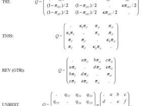 PAML中文手册