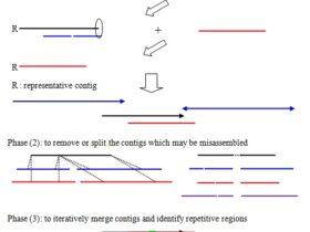 使用 CISA 进行多个 genome Assemblies 的整合