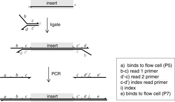 二代测序的barcode/index