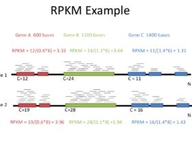 RNA-Seq中样品间的标准化