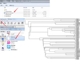 Figtree可视化进化树文件