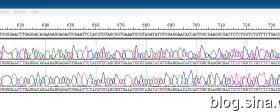 DNAstar软件的使用(三)Seqman 拼接序列