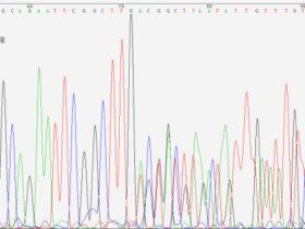 测序常见问题深度解析(一)双克隆