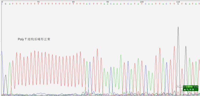 测序常见问题深度解析(二)Poly结构