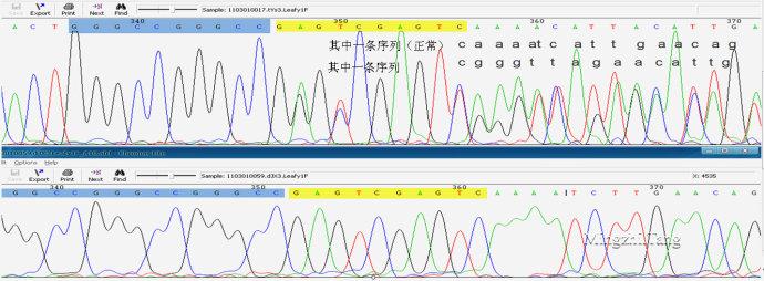 测序常见问题深度解析(三)碱基缺失