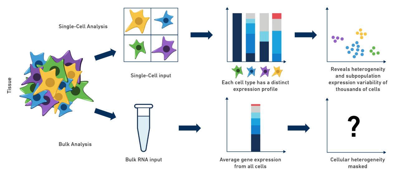 系统学习单细胞转录组测序scRNA-Seq(一)