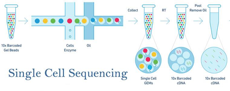 15991-单细胞RNA测序方案比较