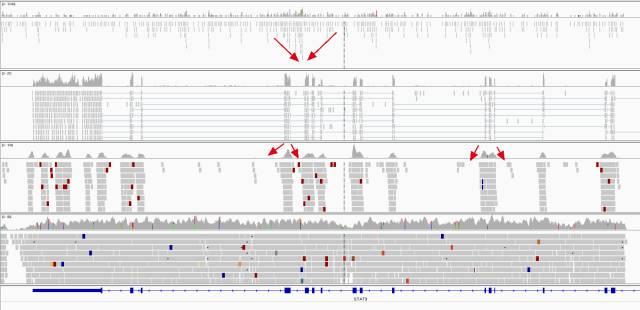 WGS,WES,RNA-Seq与ChIP-seq之间的异同