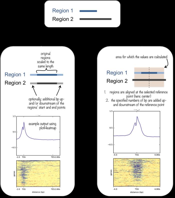 如何使用deeptools处理BAM数据