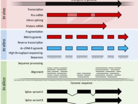 RNA-seq数据综合分析教程