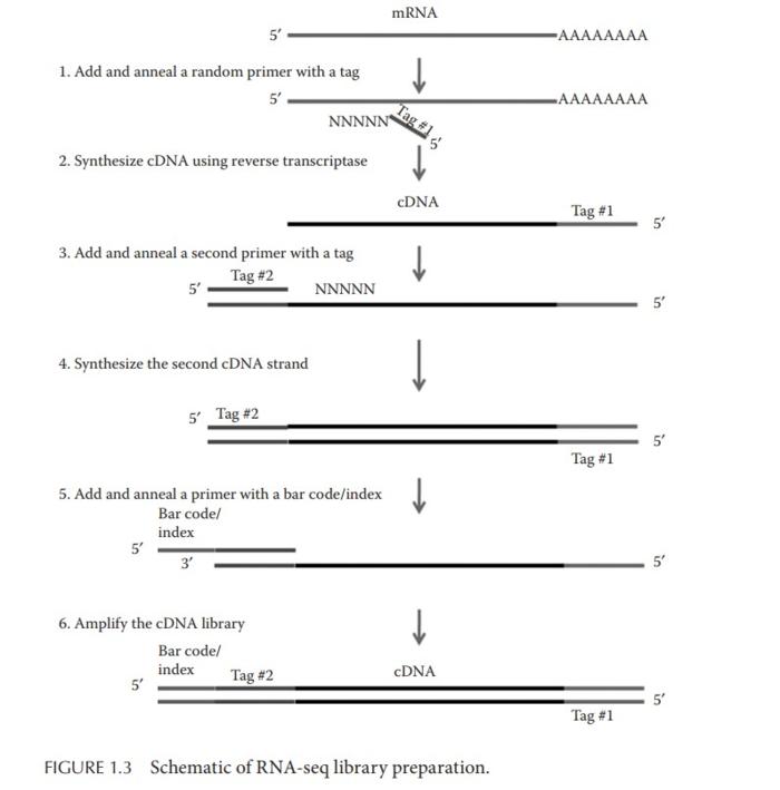 转录组入门(3):质量控制