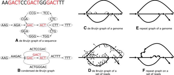 利用de Bruijn graph组装基因组的时候,Kmer为什么必须是奇数?