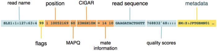 从零开始完整学习全基因组测序(WGS)数据分析:第5节 理解并操作BAM文件