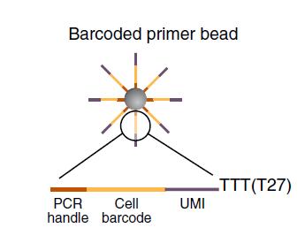 Single Cell RNA-seq原理理解