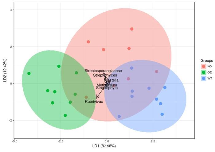 LDA分析、作图及添加置信-ggord