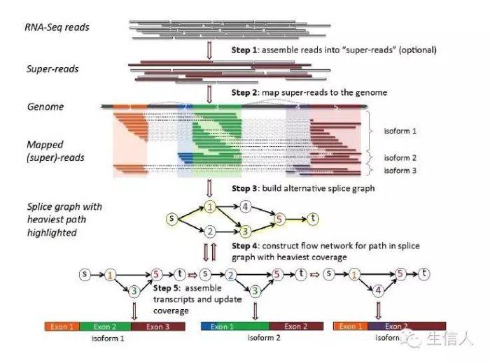 StringTie:转录组分析软件介绍