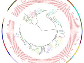用iTOL轻松绘制高颜值系统进化树