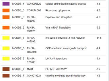基因注释工具-Metascape使用教程