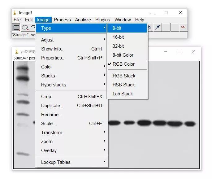 用ImageJ对条带进行定量分析
