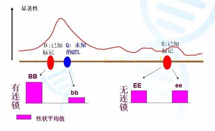 QTL 定位的原理