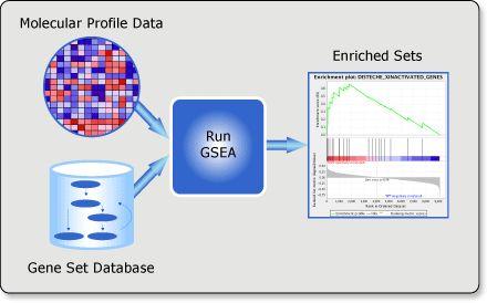 使用GSEA对基因表达数据做富集分析